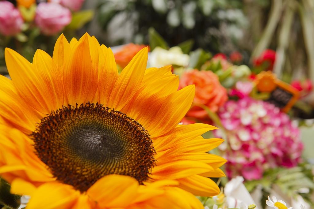 Aranjamente florale, Music Flowers